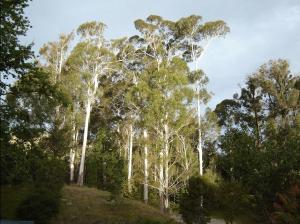 Eastwoodhill Arboretum, Gisborne