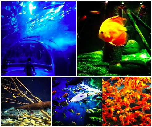 collection of yeosu aquar pics