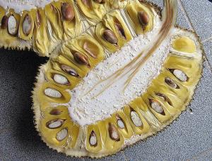 jackfruit interior