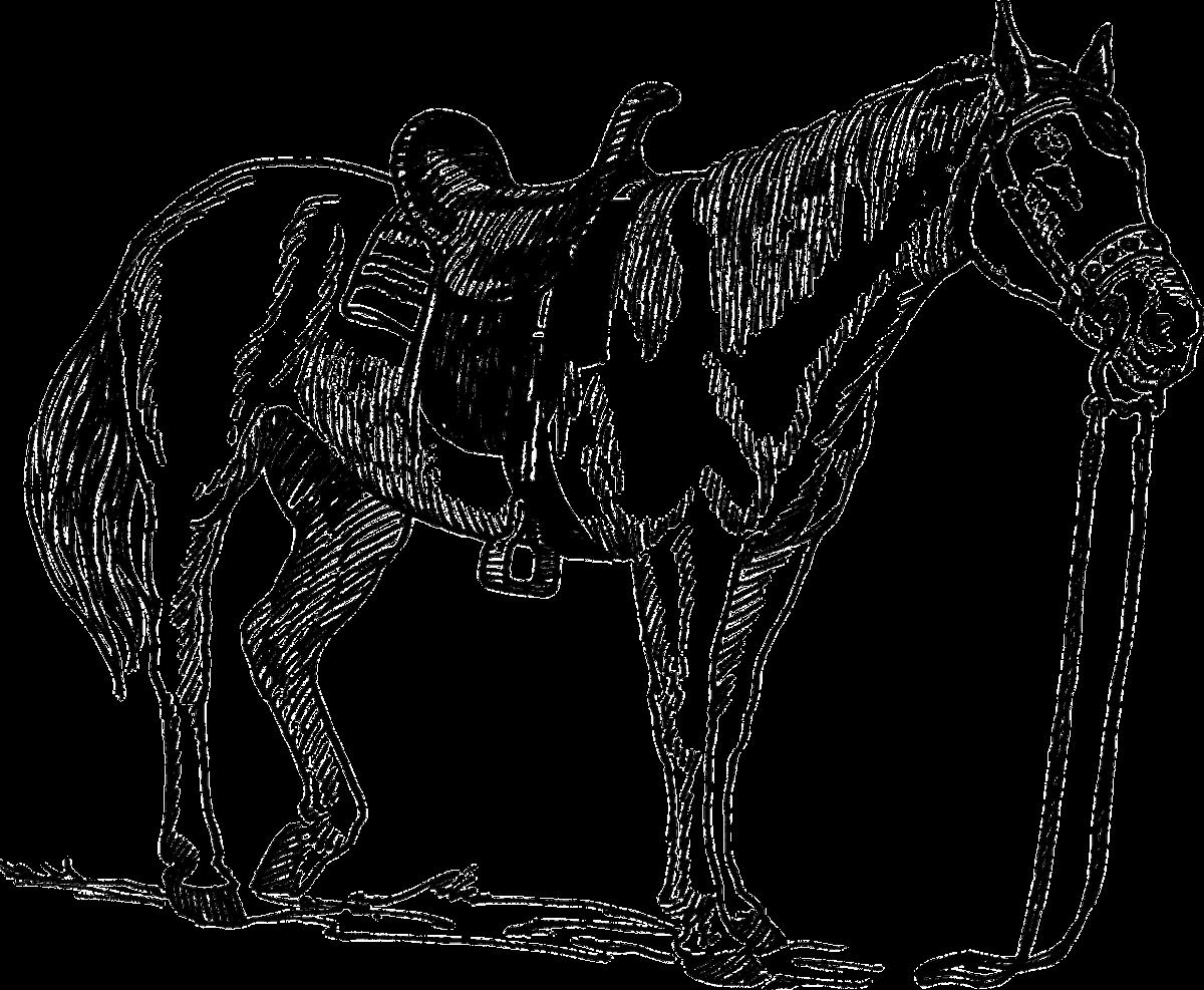 loyal horse « BARRE LIVE