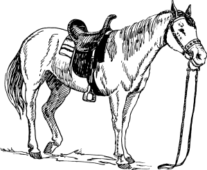 loyal horse