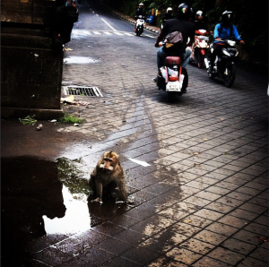 Monkey on the street