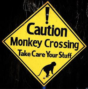 Monkey Caution