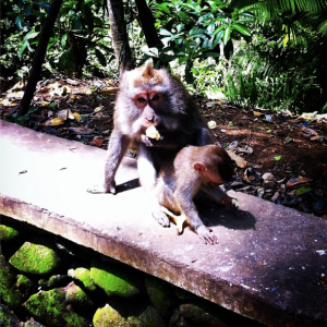 Monkeys in Monkey Forest