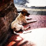 Stray dog 2